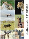 Постер, плакат: African wild animals safari