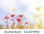 field with grass  violet... | Shutterstock . vector #211475902