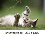 Stock photo little cat playing in the grass 21151303