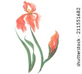 irises  painted in gouache.... | Shutterstock .eps vector #211551682