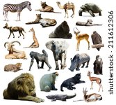 Lion  And Other African Animal...