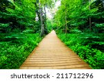 Wooden Way In Green Forest ...