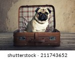 pug in a suitcase | Shutterstock . vector #211743652