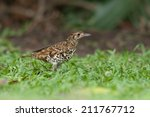 scaly thrush | Shutterstock . vector #211767712