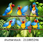 illustration of many parrots in ... | Shutterstock .eps vector #211885246
