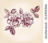 roses hand drawn vector... | Shutterstock .eps vector #211903366