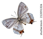 beautiful colorful butterfly... | Shutterstock . vector #212051326