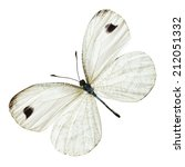 Stock photo white wings butterfly with black marginal markings on white background isolated 212051332