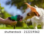 Dog Drinking From A Garden Hos...