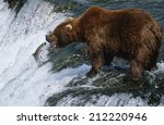 Usa  Alaska  Katmai National...