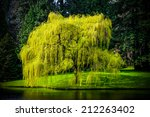 spring weeping willow tree | Shutterstock . vector #212263402