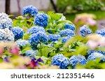 Blue Hydrangea In The Garden I...