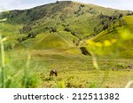 horse at savana hill  mt.bromo  ... | Shutterstock . vector #212511382