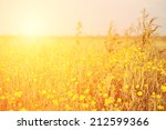 vintage photo of yellow flower... | Shutterstock . vector #212599366