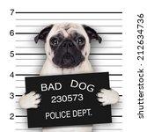 Funny Cute Pug Holding A...