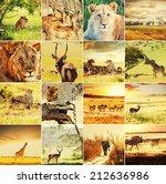 african safari collages | Shutterstock . vector #212636986