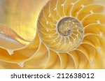 Close Up Of A Nautilus Shell...