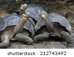 galapagos giant tortoise ... | Shutterstock . vector #212743492