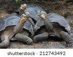 Stock photo galapagos giant tortoise galapagos islands ecuador 212743492