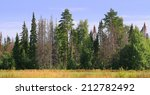 edge of the forest with dead... | Shutterstock . vector #212782492