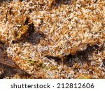 red ants with their eggs. red... | Shutterstock . vector #212812606