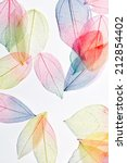 color leaves | Shutterstock . vector #212854402