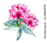 single pink peony isolated on... | Shutterstock .eps vector #212884996