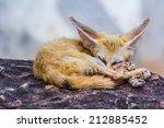 Small Fennec Fox Sleeping ...