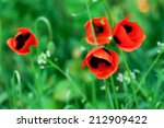Red Poppy Flowers In The Meado...