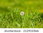 dandelion flower over green summer grass background - stock photo