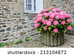 Pink Hydrangea Bush In Wooden...