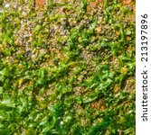 algae background texture    Shutterstock . vector #213197896