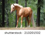 beautiful palomino horse stands ... | Shutterstock . vector #213201532