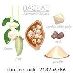 superfood baobab fruit. flower... | Shutterstock .eps vector #213256786