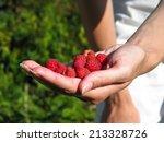 hands full of raspberries | Shutterstock . vector #213328726