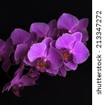 branch of magenta orchid... | Shutterstock . vector #213347272