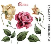 roses and leaves  watercolor ... | Shutterstock . vector #213349576