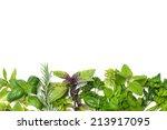 fresh green kitchen herbs... | Shutterstock . vector #213917095