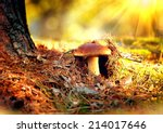Cep Mushroom Growing In Autumn...