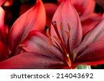 Red Azalea Petals