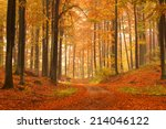 Kashubia  Poland  Autumn Forest.