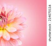 Close Up Petal Of  Pink Macro...