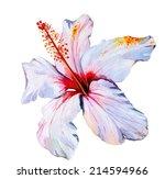 hibiscus  watercolor tropical... | Shutterstock . vector #214594966