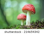 Fly Agaric In Forest Close Up