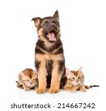 Stock photo german shepherd puppy and bengal kittens looking at camera isolated on white background 214667242