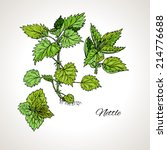 colored drawing plant nettles | Shutterstock .eps vector #214776688