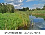 wild swimming   cattail bush  | Shutterstock . vector #214807546