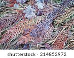 Frozen Autumn Fern  Leaves And...