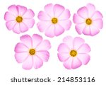 Set Of Five Pink Cosmos Flower...