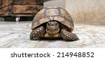 Close view of an old turtle in Africa - stock photo